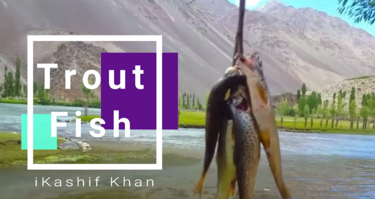 Trout fishing | Everything you need to know
